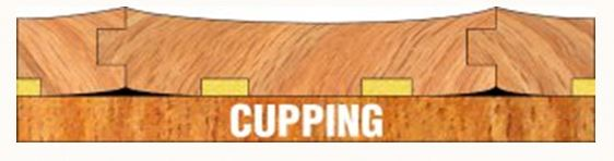 Image result for wood cupping