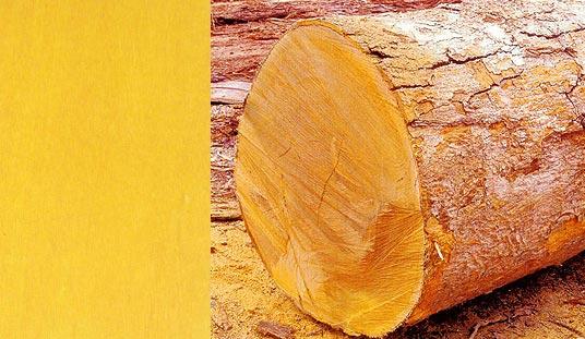 Yellowheart Tree