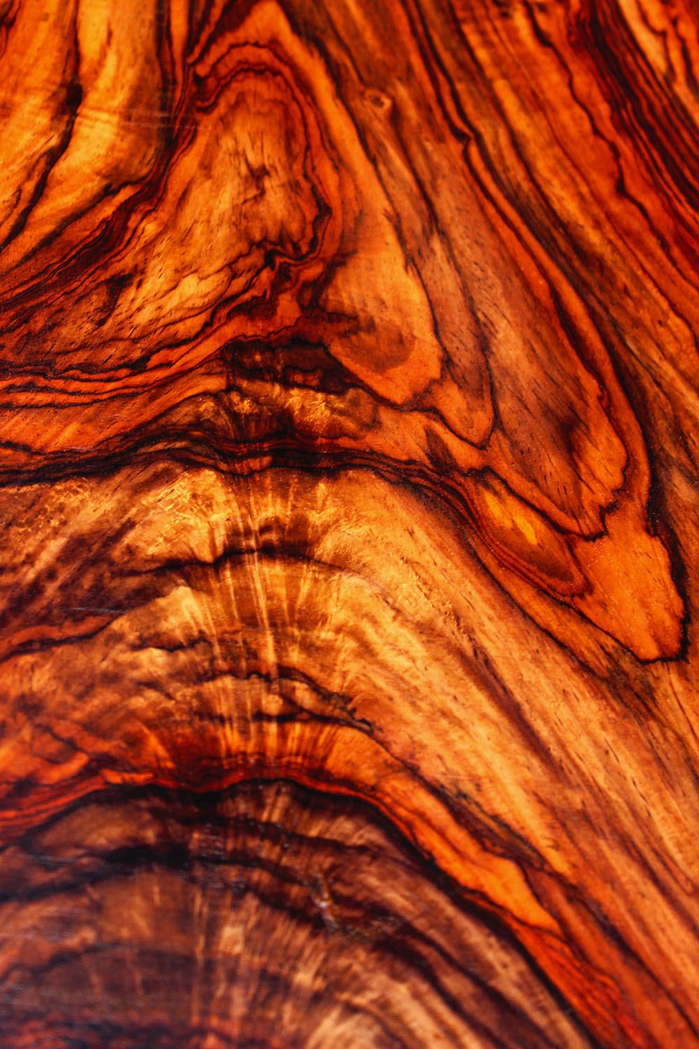 Cocobolo King Rosewood The Flooring Blog