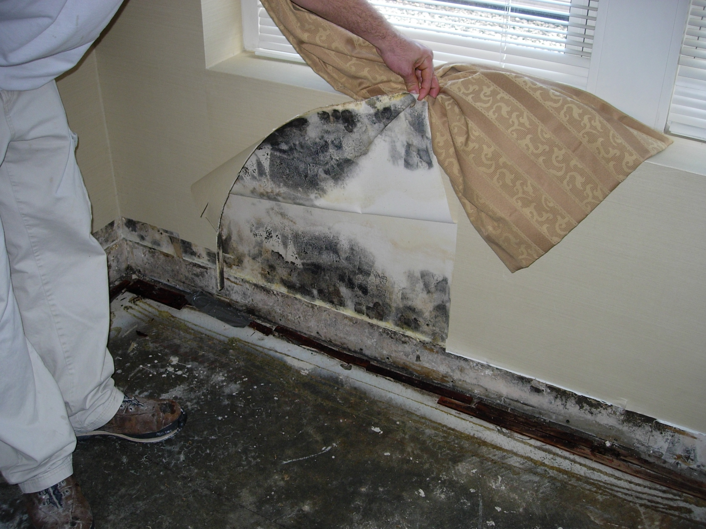Flood Damage Mold And How To Start Rebuilding Your Home