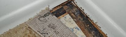 Mold Growth underneath Carpeting